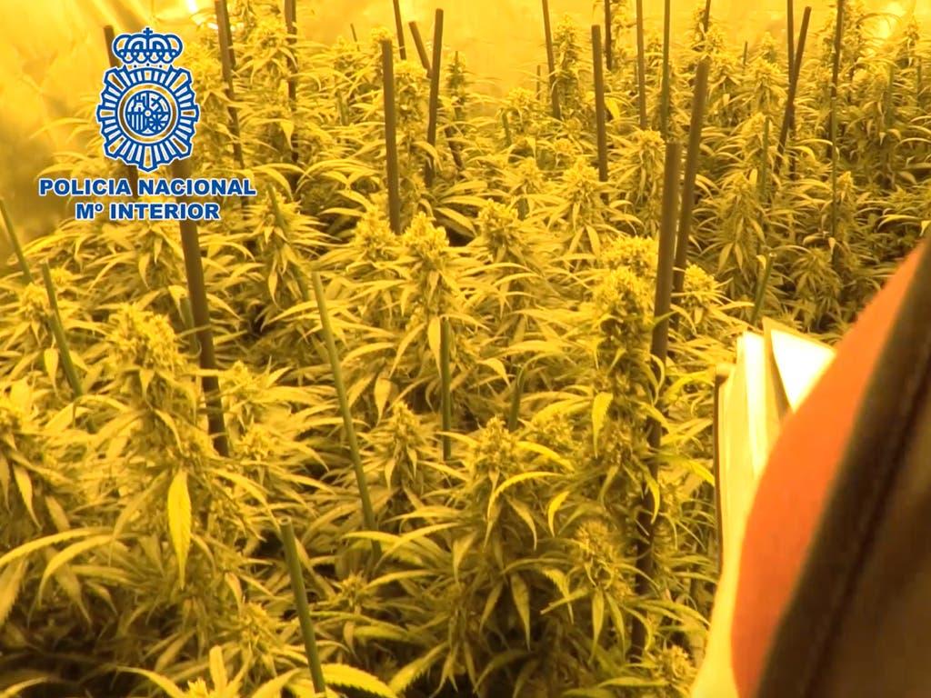 Cae un conocido clan que cultivaba marihuana en la Cañada Real