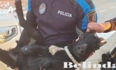 La odisea para atrapar a una cabra abandonada en Villalbilla