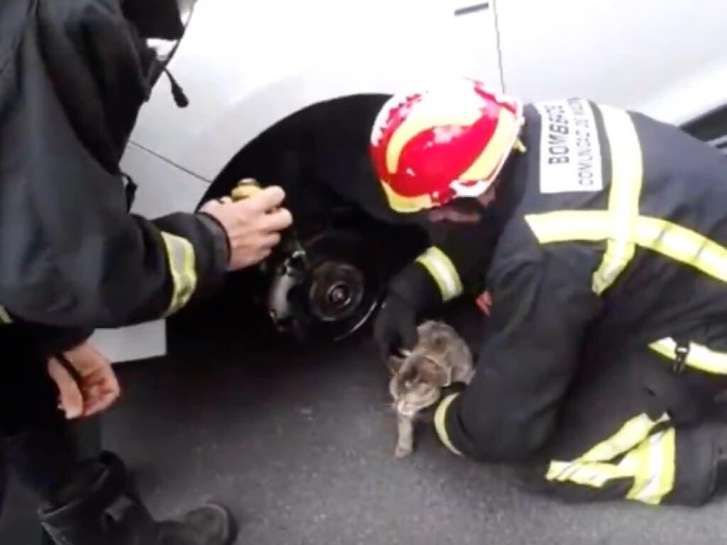 Los Bomberos rescatan a un gato atrapado en un coche