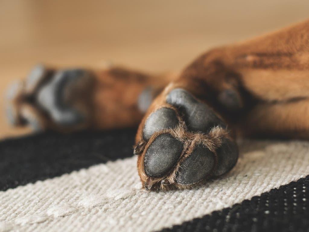 Rescatan a varios perros abandonados en un local de Guadalajara