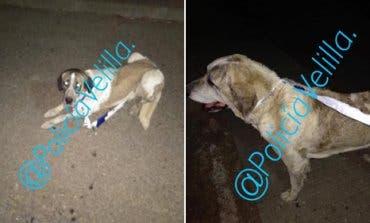 La Policía de Velilla recoge a dos perros sueltos en la M-208 y denuncia a su dueño