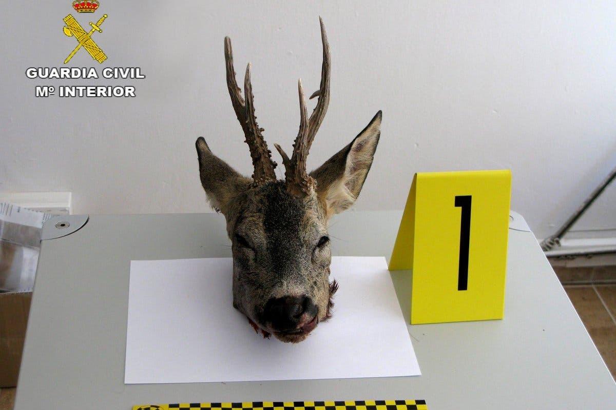 La Guardia Civil intensifica sus acciones contra la caza furtiva en Guadalajara