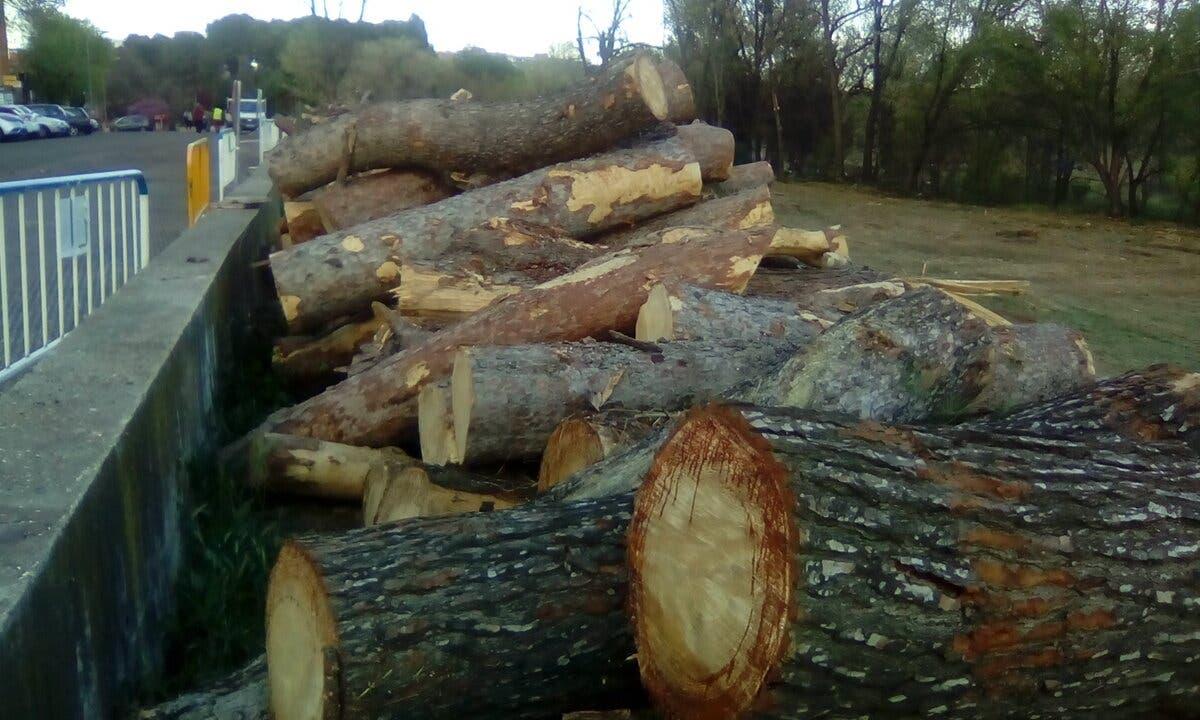 Denuncian ante el Seprona la tala de árboles en Alcalá de Henares