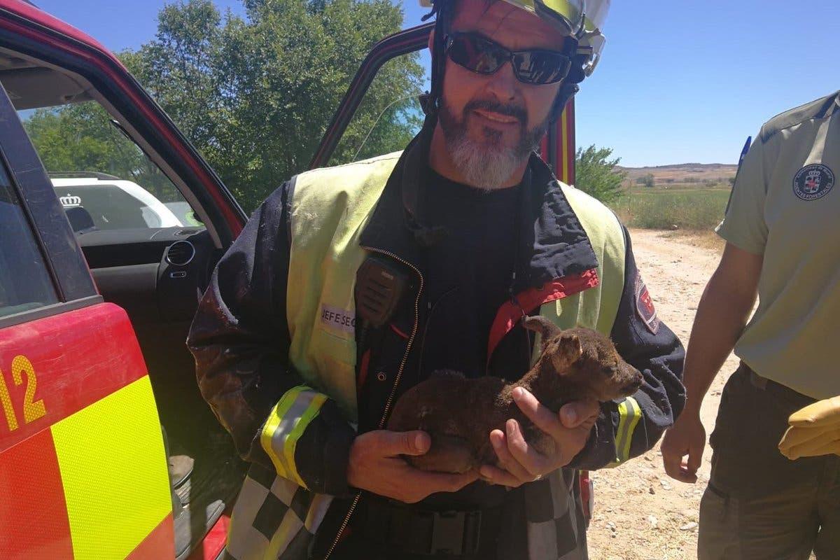 Rescatan a una cría de corzo en un incendio en Torrejón