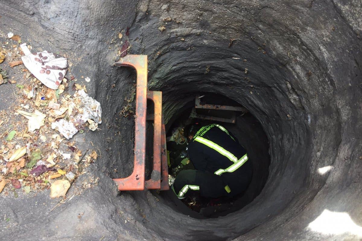 Los Bomberos rescatan a dos patitos que habían caído a una alcantarilla en Madrid