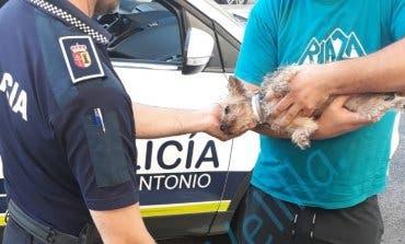 Rescatan a un perro en una piscina de Velilla de San Antonio