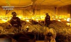Desmantelada en Pioz una plantación de marihuana con más de 1.000 plantas