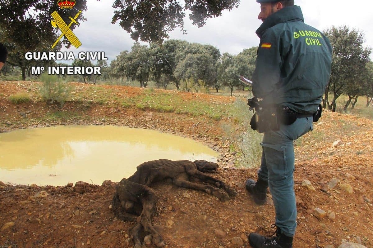 Un investigado por maltrato animal en El Casar