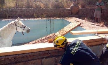 Rescatan a una yegua que había caído a un estanque en Sigüenza