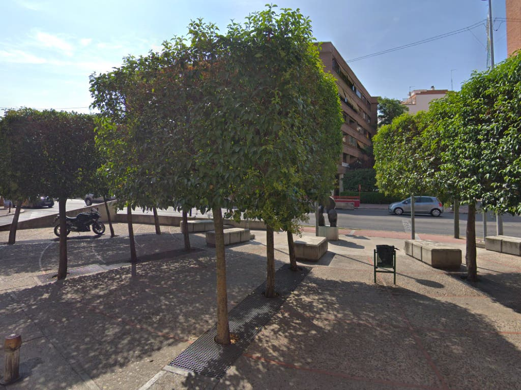 Alcalá de Henares trasplantará 14 árboles de Vía Complutense