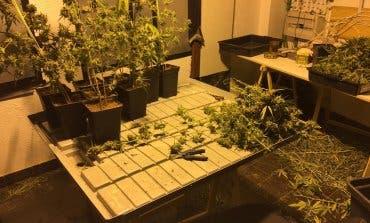 Dos detenidos y una plantación de marihuana desmantelada en Arganda