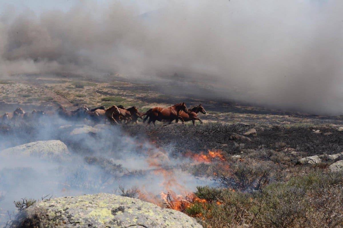 El piloto que salvó a 27 caballos de morir quemados en el incendio de La Granja