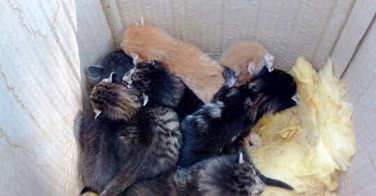Abandonan a siete gatitos junto a un contenedor en Villalbilla