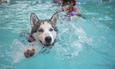 Paracuellos organiza un chapuzón perruno en la piscina municipal