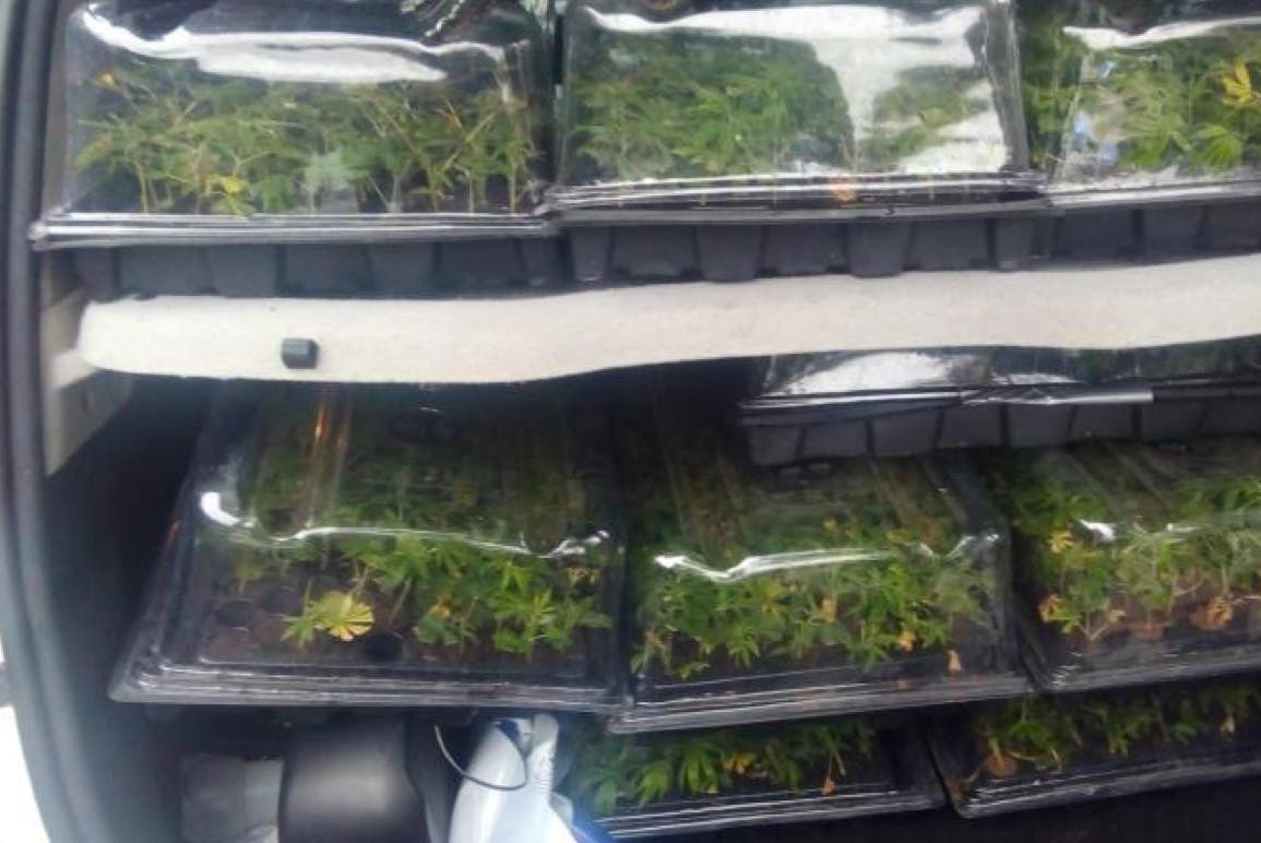 Detenido en Madrid un conductor cuando transportaba 1.300 plantas de marihuana