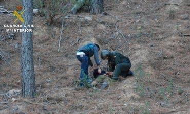 Hallan 4.600 plantas de marihuana en el Parque Natural de la Sierra Norte de Guadalajara