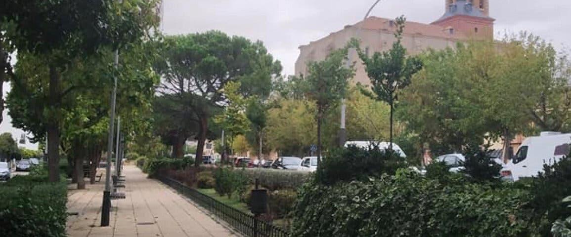 Denuncian «tala masiva» de árboles en Meco
