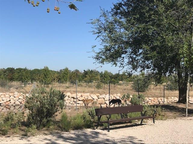 Alcalá de Henares estrena área canina en el Gran Parque de Espartales