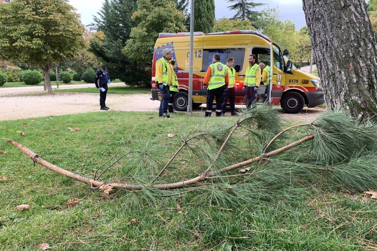Herido grave tras caer de un pino en un parque de Madrid