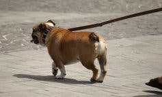 Tener perro en Alcalá de Henares será más caro con el ADN canino