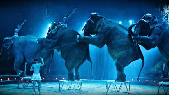 El circo con animales regresa a Madrid tras la prohibición de Carmena