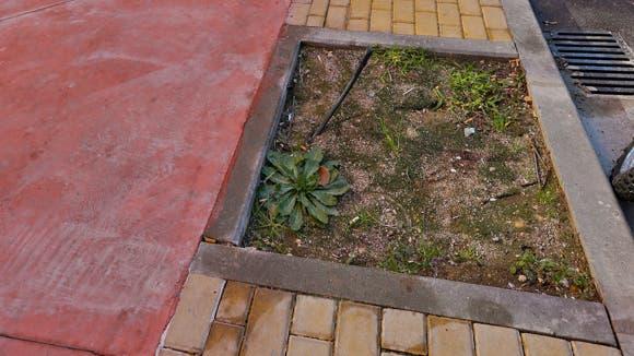 Coslada planta más de 200 árboles en alcorques vacíos