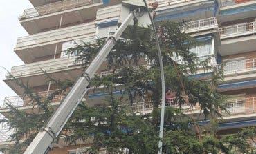 Retiran un nido de cotorra argentina de 100 kilos de peso