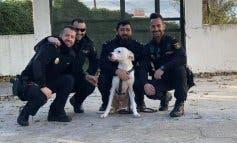 Rescatado en Alcalá de Henares un perro encerrado sin comida ni agua