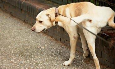 Los dueños de perros, obligados a limpiar sus orines en Torres de la Alameda