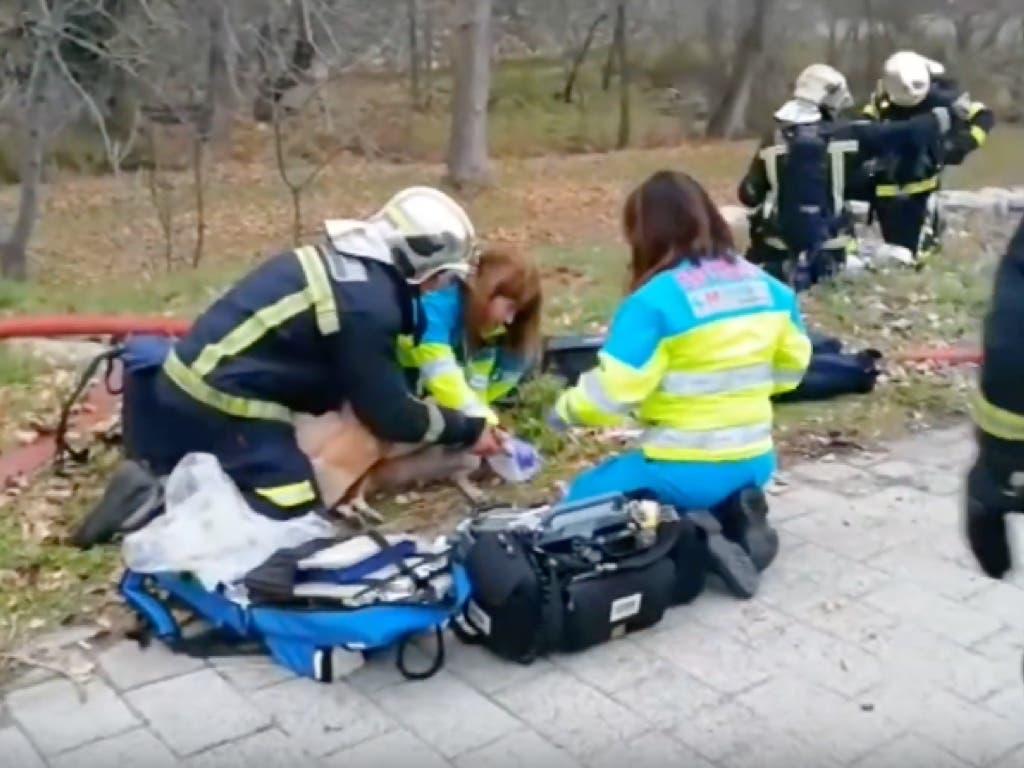 Logran salvar la vida de un perro tras un incendio en Madrid