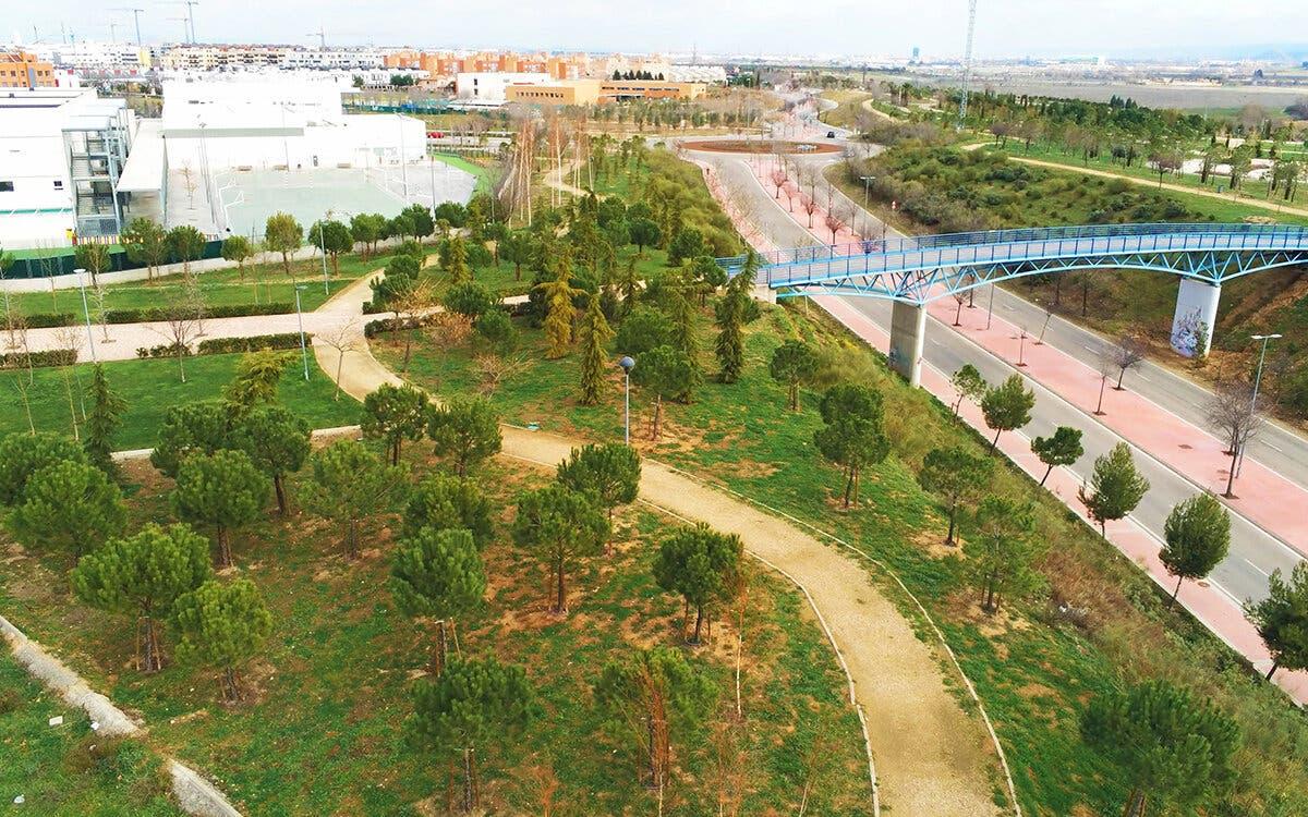 Torrejón de Ardoz planta 10.000 árboles en Soto del Henares