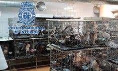 Los 270 perros rescatados en Arganda y Meco aún no pueden ser adoptados