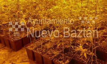 Hallan 800 plantas de marihuana en un chalet de Nuevo Baztán