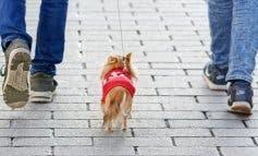 Los animalistas rechazan el ADN canino que quiere implantar Alcalá de Henares