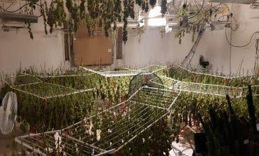 Detenidos dos colombianos en Camarma de Esteruelas por cultivar 579 plantas de marihuana