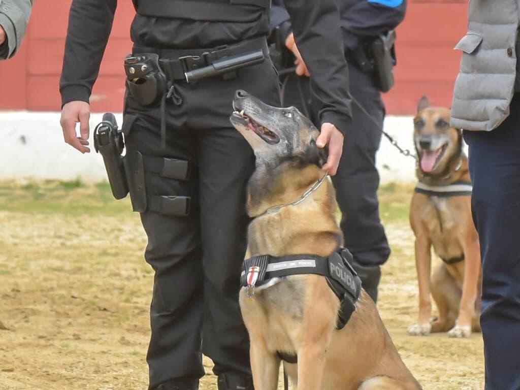 Se jubilaUdyco, uno de los perros policía de Torrejón de Ardoz