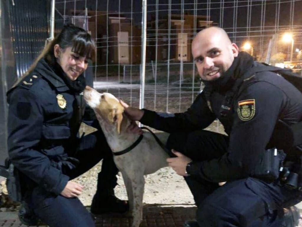 Policías nacionales evitan que un perro sea atropellado en Alcalá de Henares