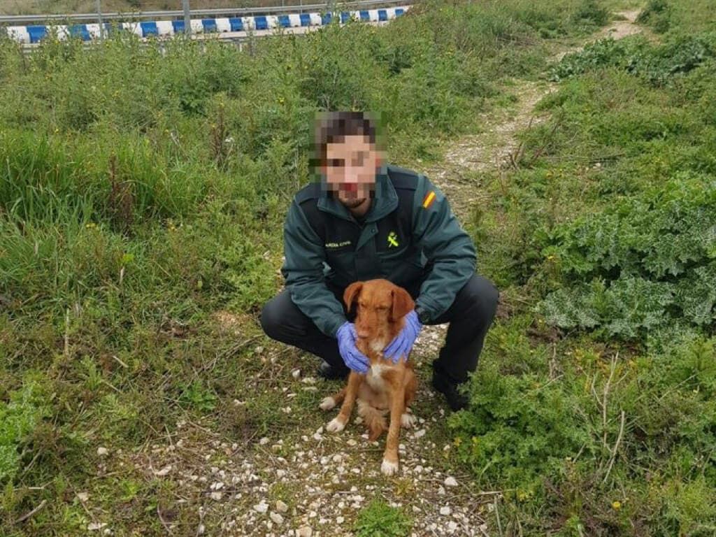 Rescatan a un perro en Cabanillas que llevaba dos días atrapado en una alcantarilla