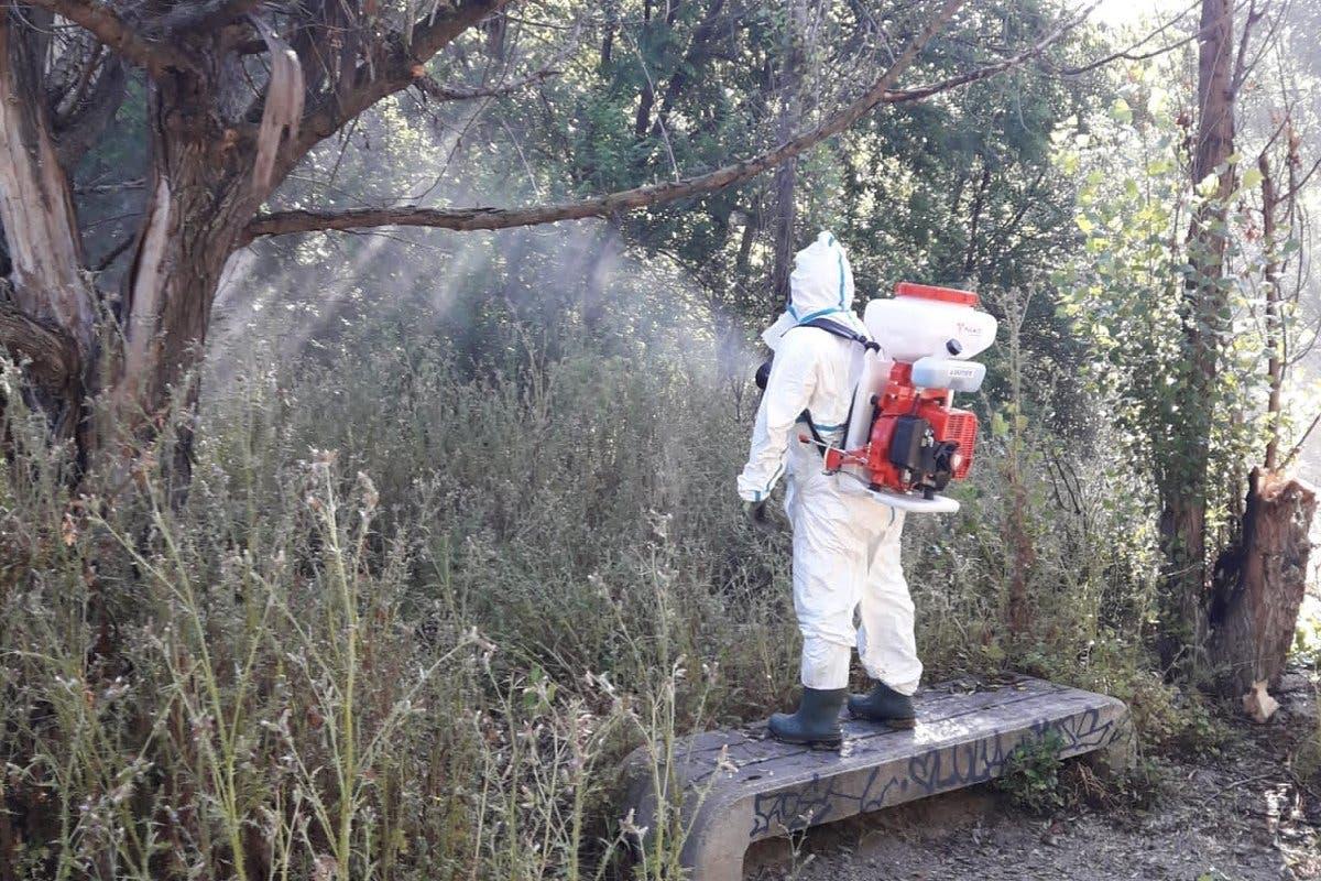 San Fernando de Henares comienza a luchar contra los mosquitos