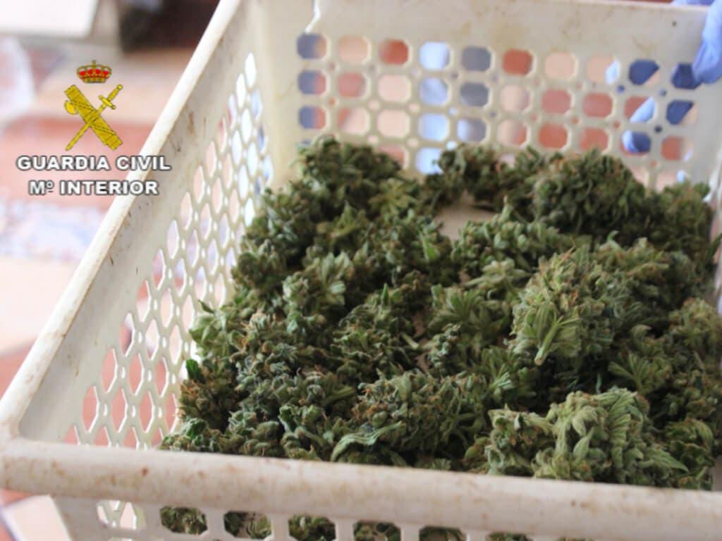 La Guardia Civil desmantela una plantación de marihuana indoor en El Casar