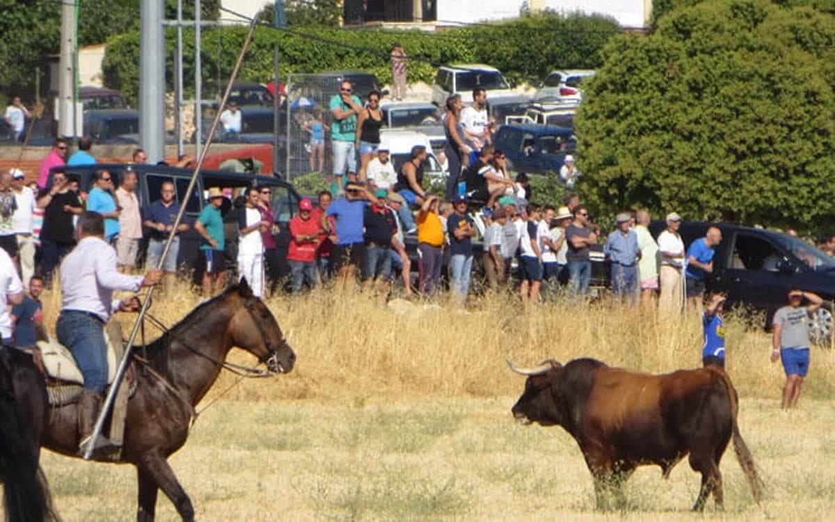 Ganaderos de la provincia de Guadalajara confían en poder celebrar encierros este verano