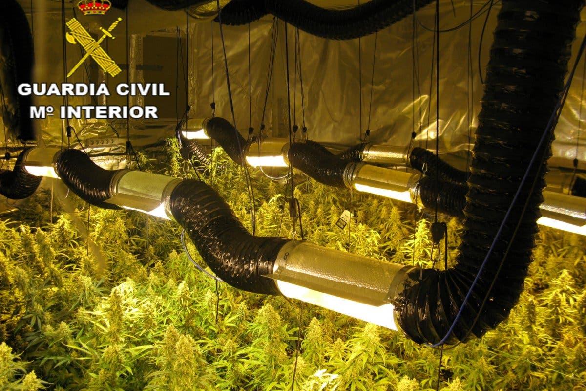 Detenidos padre e hijo por cultivar marihuana en una vivienda de Azuqueca de Henares