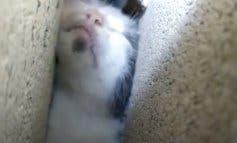 El angustioso rescate de un gato atrapado entre dos paredes en Morata de Tajuña