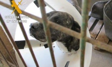 Imputado un vecino de Guadalajara por abandonar a su perro en Navarra
