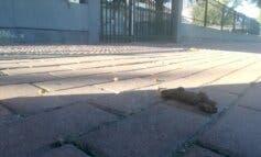 Denuncian suciedad en el entorno de los colegios de Alcalá de Henares