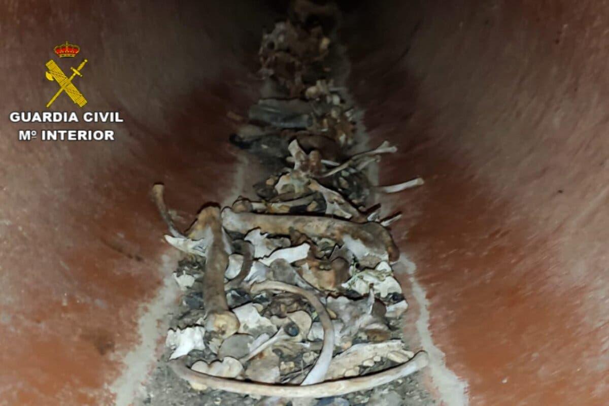 Descubren decenas de cadáveres de perros, algunos decapitados, en una alcantarilla de El Casar