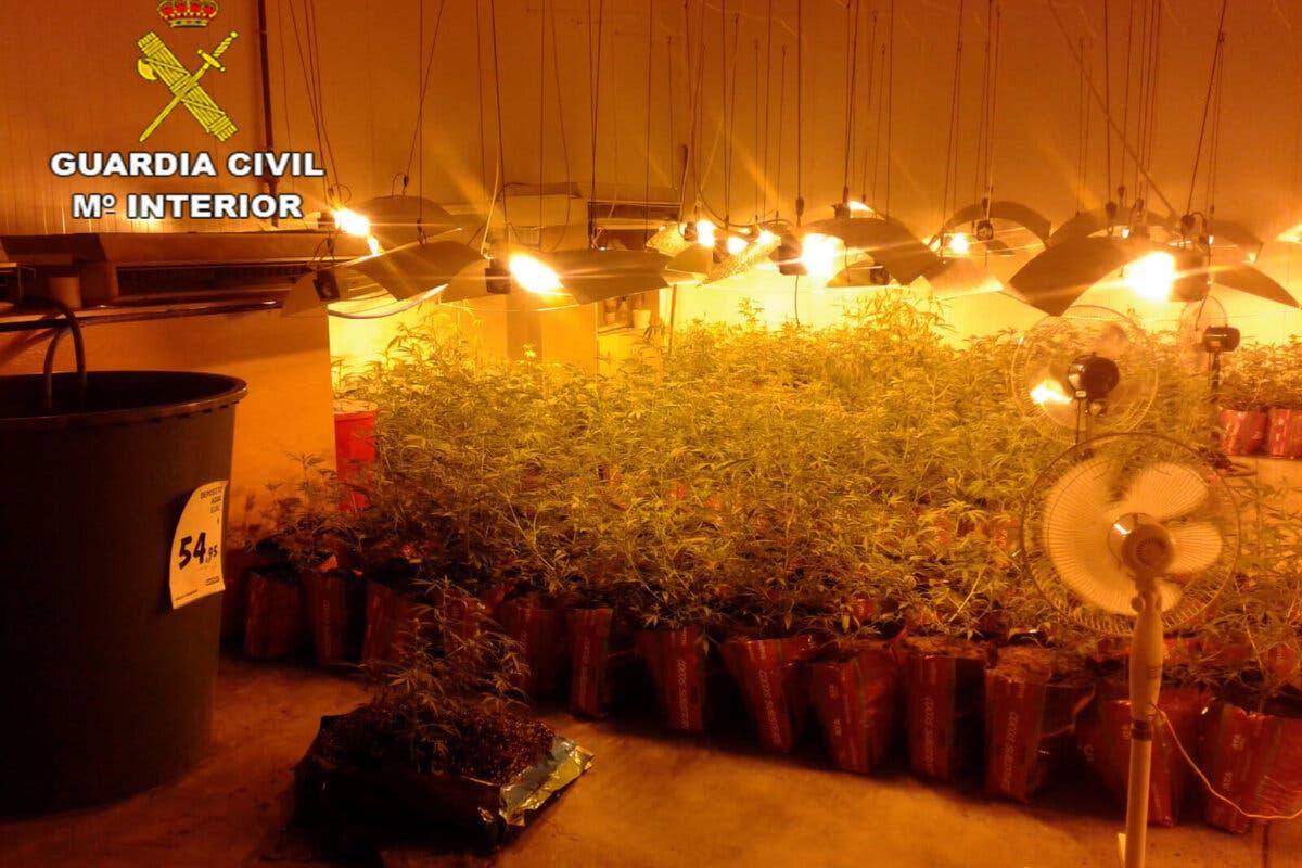 Cuatro detenidos en Marchamalo y Cabanillas por cultivar marihuana
