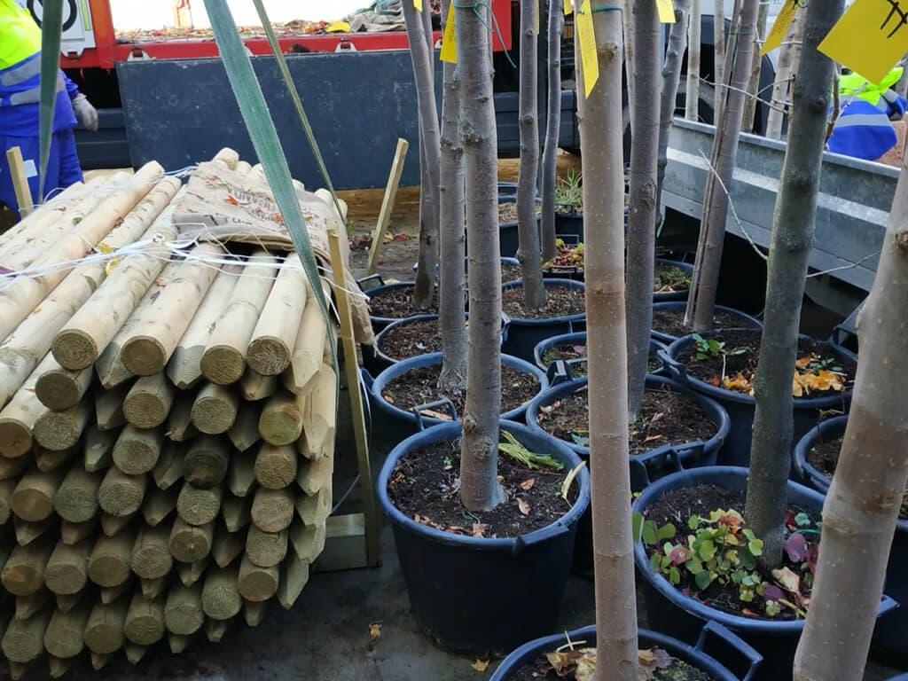 San Fernando de Henares plantará cerca de 300 árboles hasta finales de año