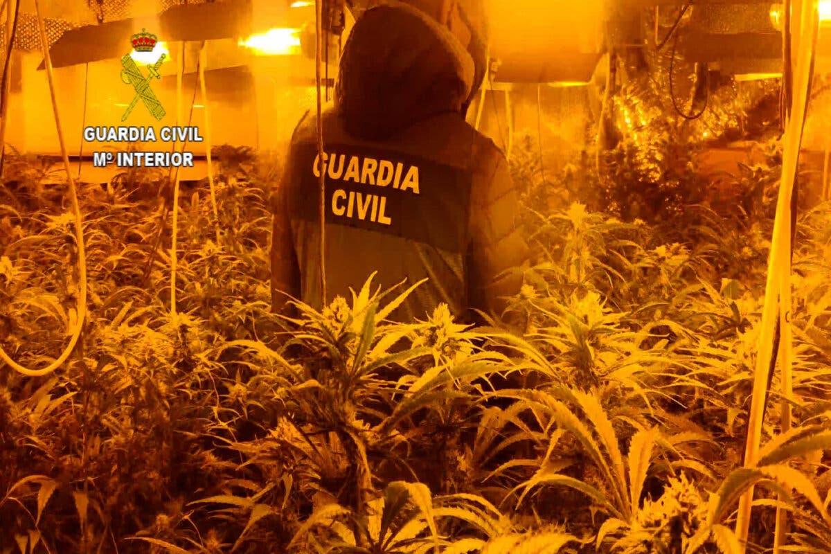 La Guardia Civil desmantela una plantación de marihuana en Valdeaveruelo