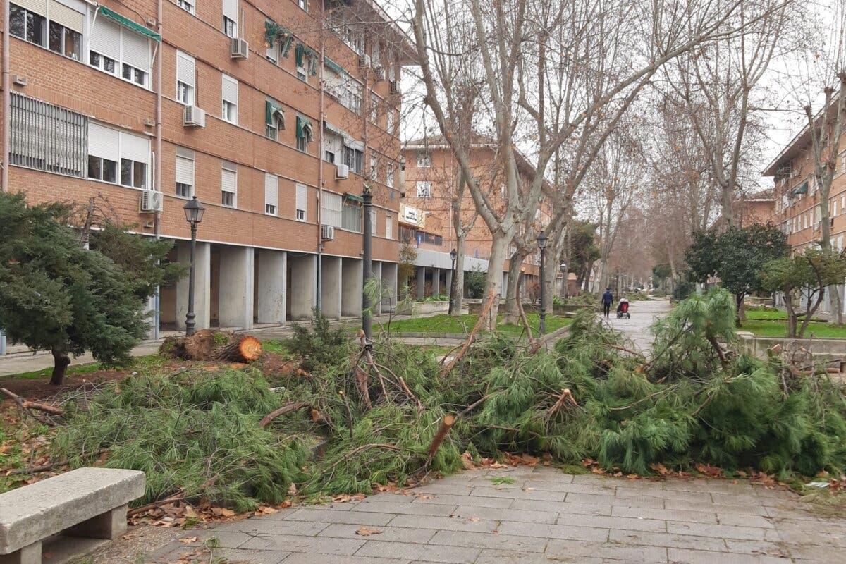 Restos de arbolado en las calles de Alcalá de Henares 20 días después del temporal
